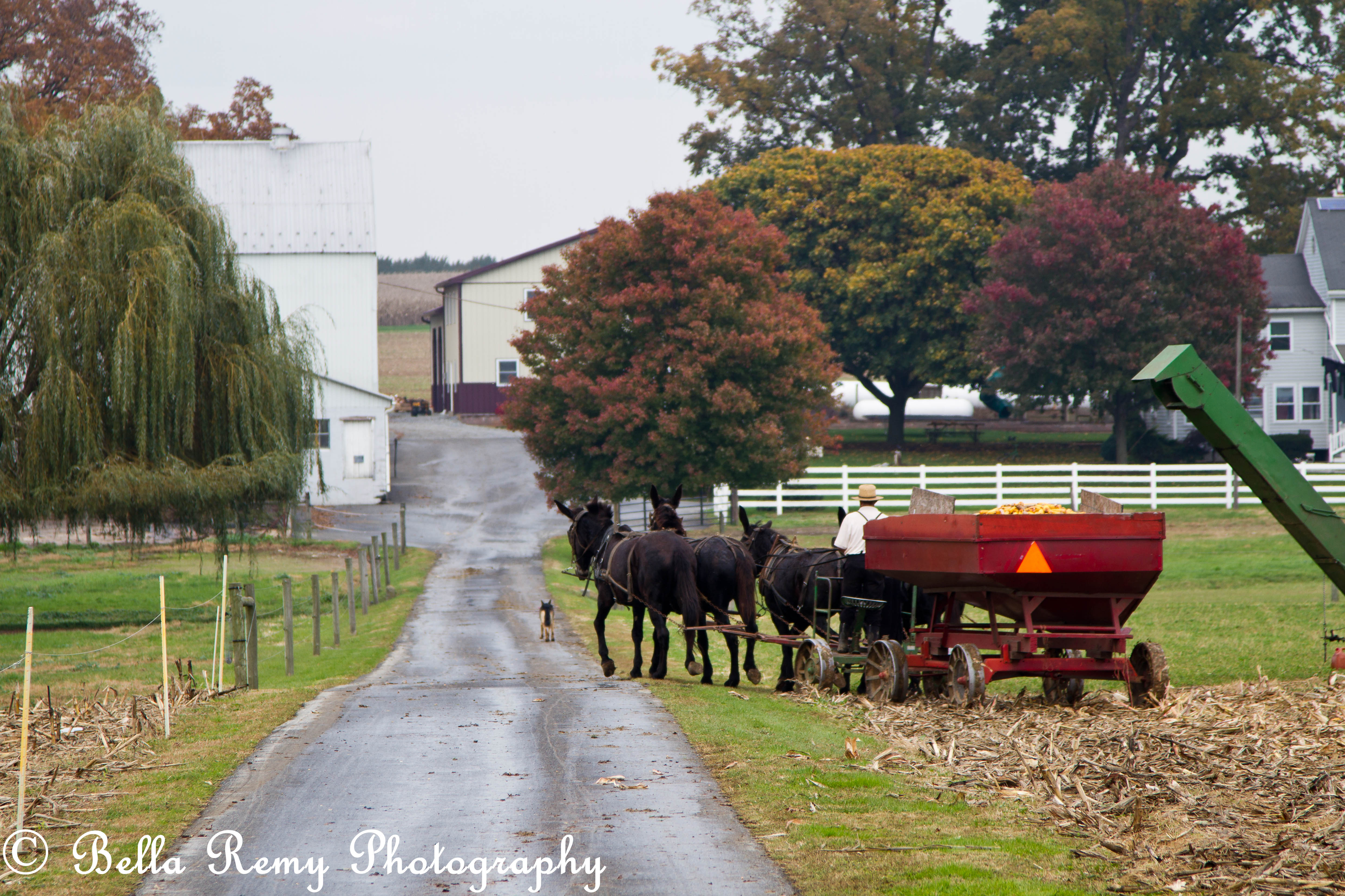 an amish harvest emily carter mitchell nature wildlife the