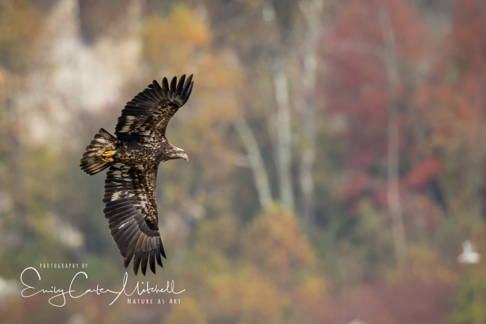 Conowingo3nov17-8619-Edit