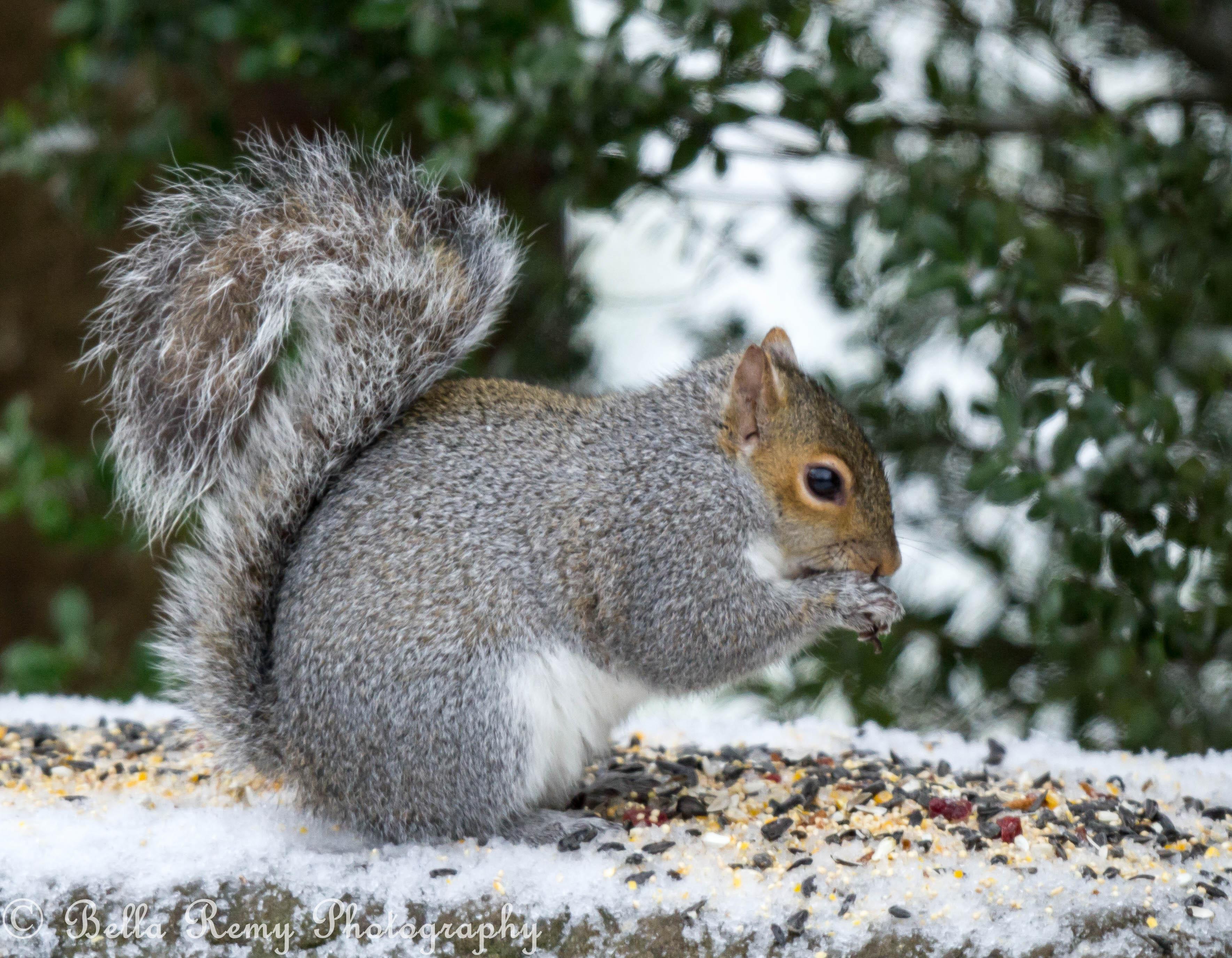 Fat Squirls 105
