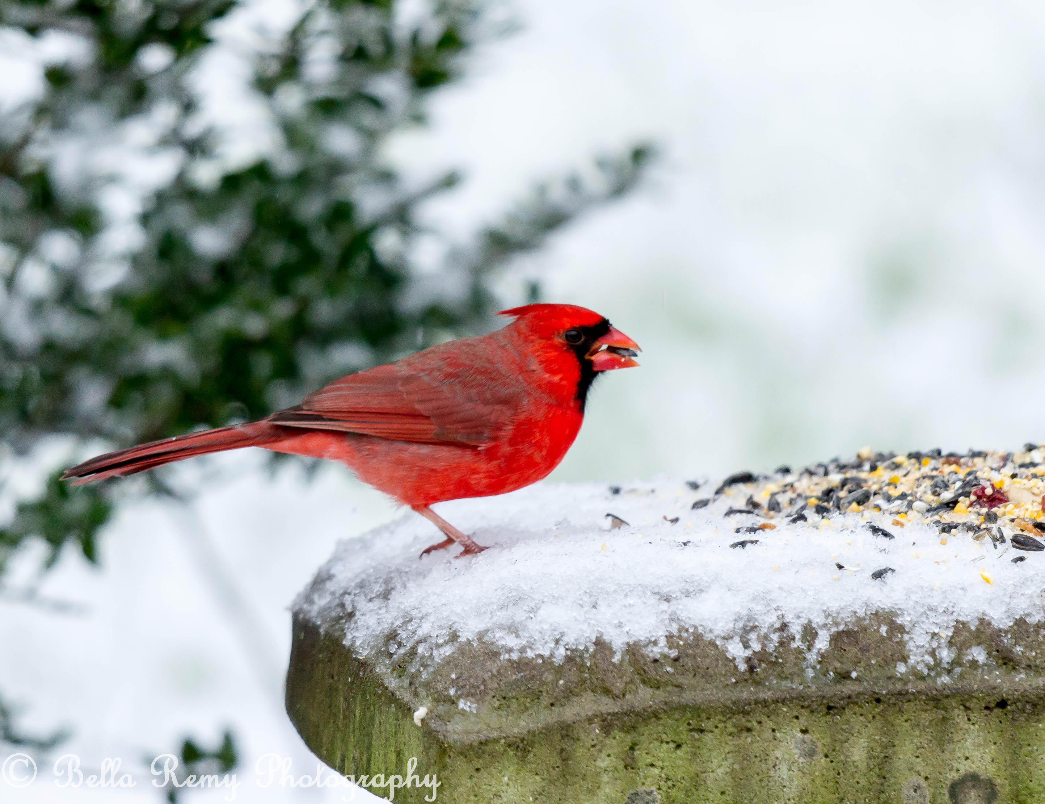 birds in the snow emily carter mitchell nature u0026 wildlife
