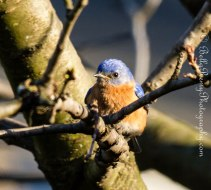Bluebird - So sweet
