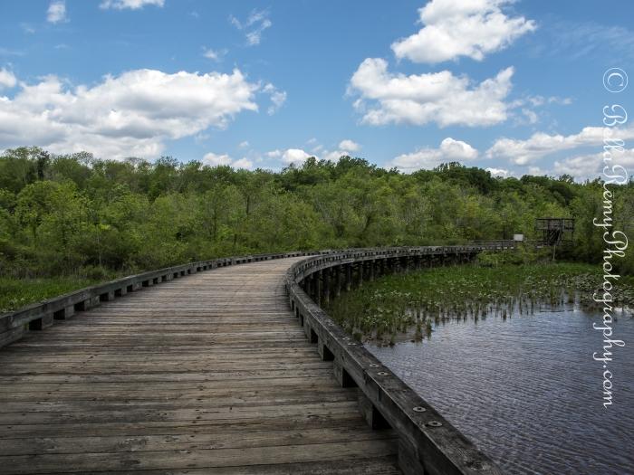 Bridge leading from Merkle Wildlife Sanctuary to Patuxent River Park