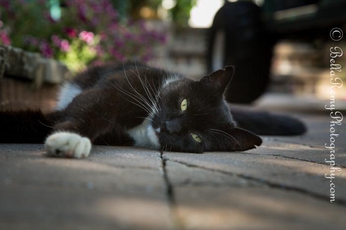 cats29jun13-1311