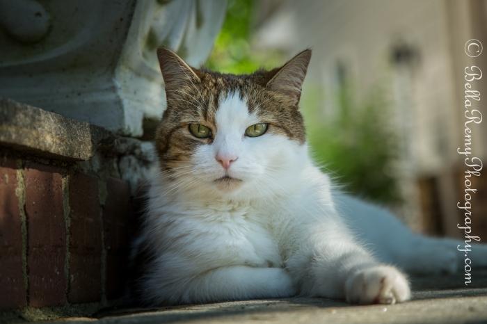 cats29jun13-1326