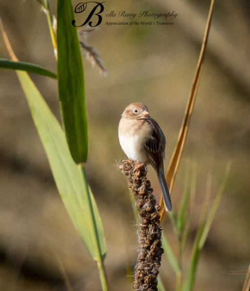 Start with a little birding. Field Sparrow