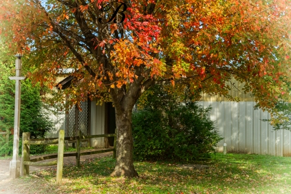 Admire the beautiful trees when arriving at the barn.