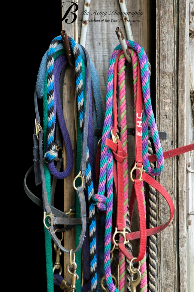 Grab a halter to go and find a horse to ride.