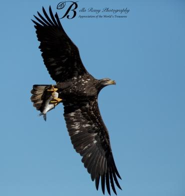 Juvenile flying high
