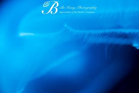Aquarium-9317