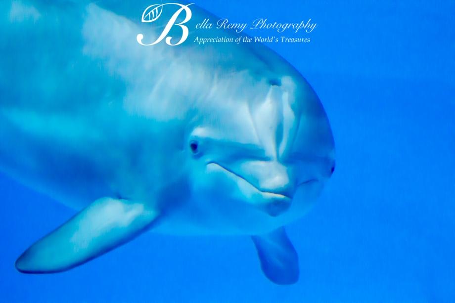 Aquarium-9424