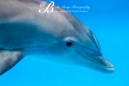 Aquarium-9427