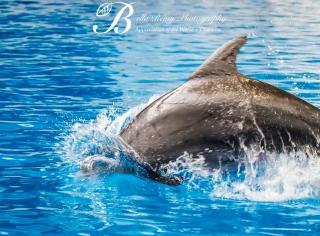 Aquarium-9474