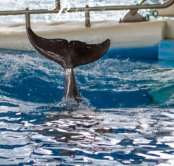 Aquarium-9488