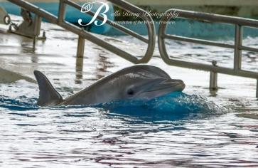 Aquarium-9507
