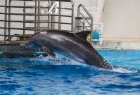 Aquarium-9536