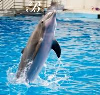 Aquarium-9563