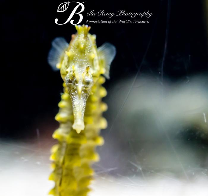 Aquarium-9585