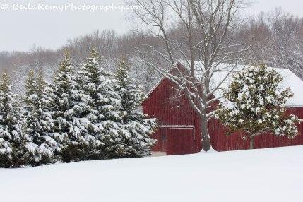 Snow17mar14-9846