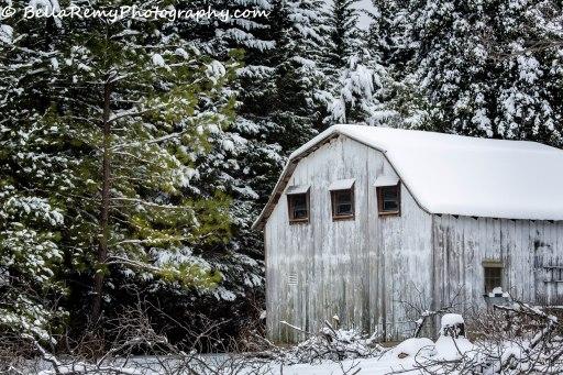 Snow17mar14-9865