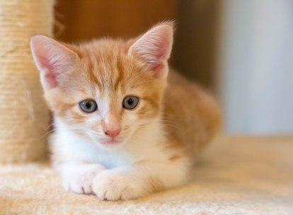 kittens17jun14-2129