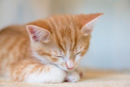 kittens17jun14-2149