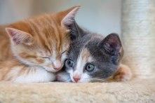kittens17jun14-2163