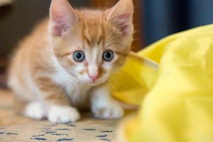 kittens17jun14-2166
