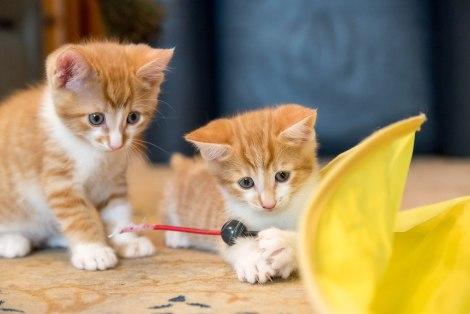 kittens17jun14-2194
