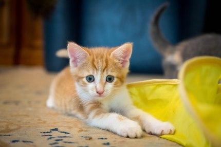 kittens17jun14-2198