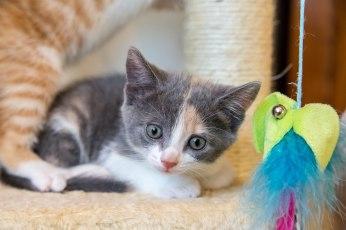 kittens17jun14-2207