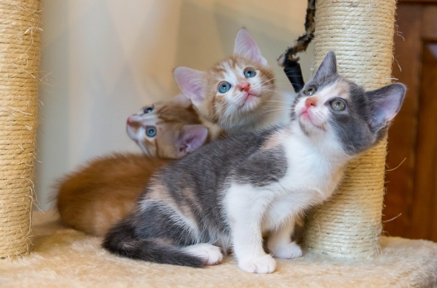 kittens17jun14-2222