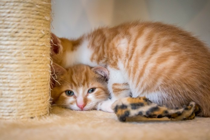kittens17jun14-2223