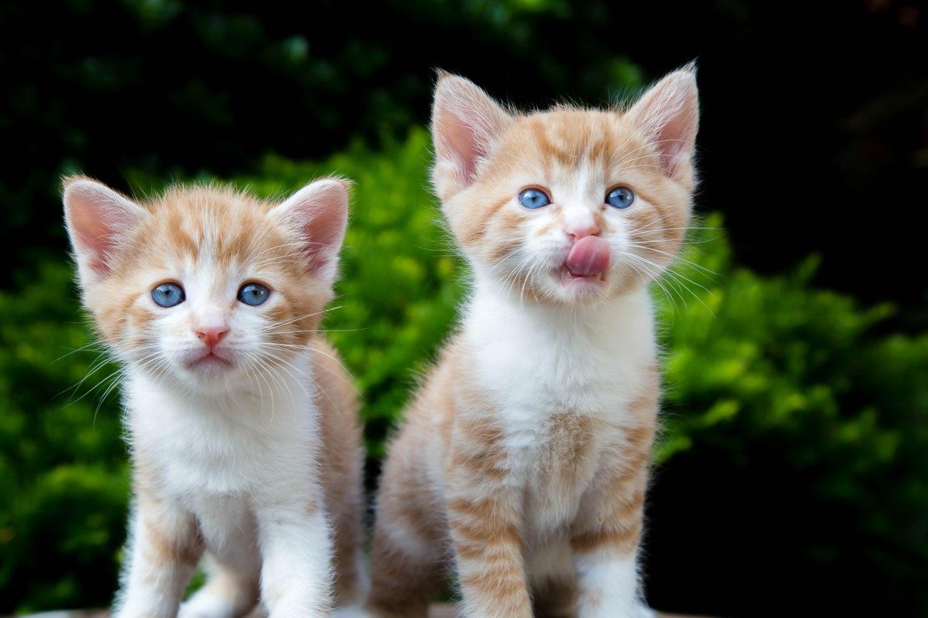 Kittens2jun14-3705