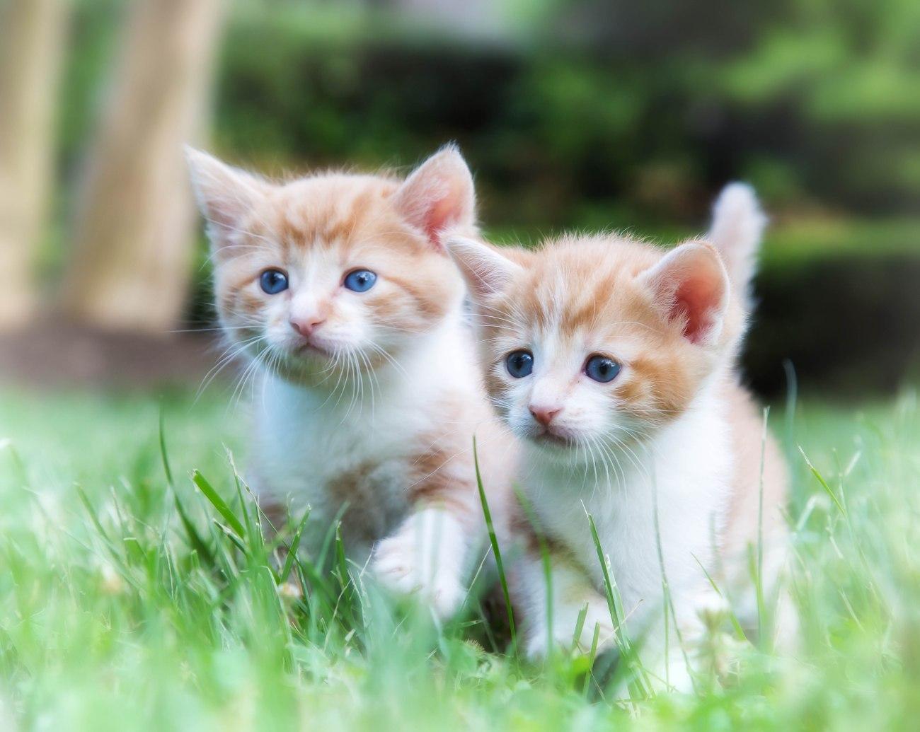 Kittens2jun14-3786-Edit