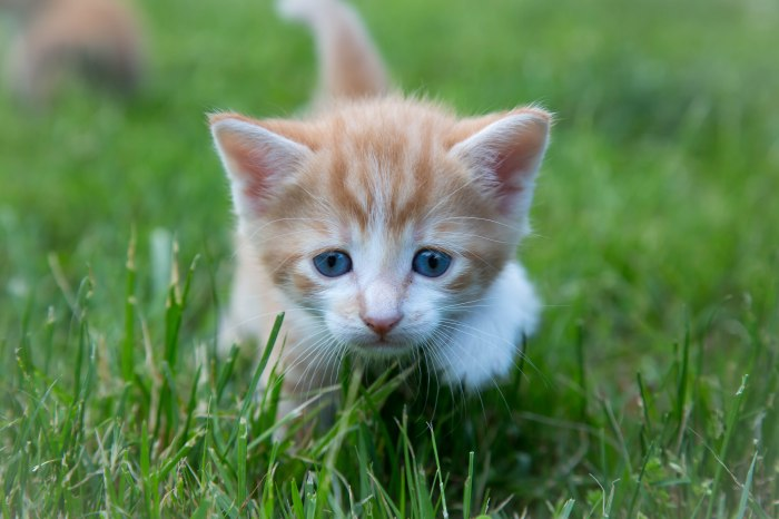 Kittens2jun14-3817