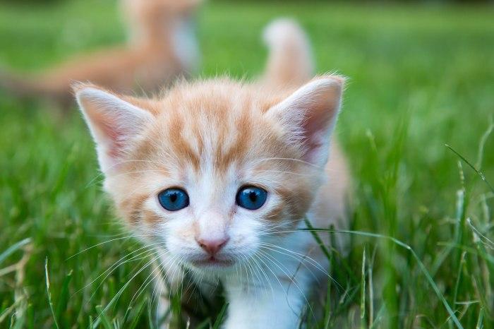 Kittens2jun14-3870