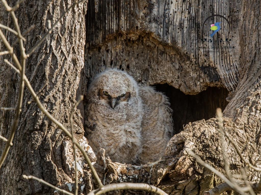 Owls6apr16-8263
