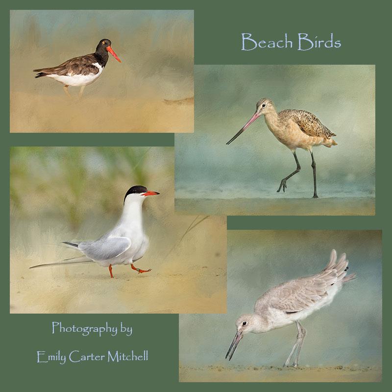 beach-birds-web-collage