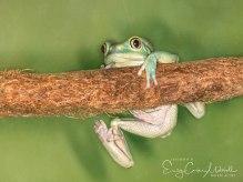 frogs15jan17-4871-2
