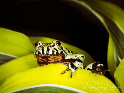 frogs15jan17-4942