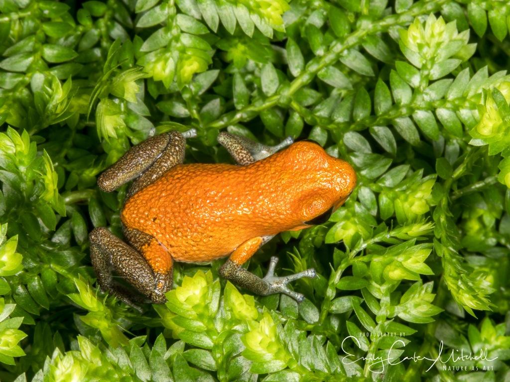 frogs15jan17-4990