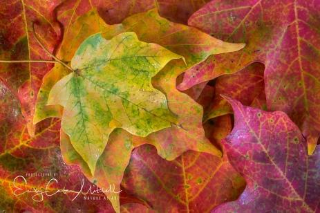 Leaves6oct17-2869
