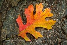Leaves6oct17-2915