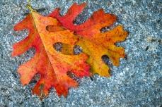 Leaves6oct17-2922