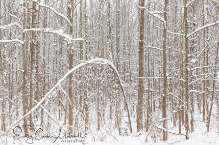 snow13jan19-1371-edit